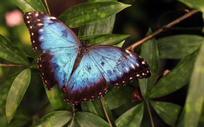 Je bent een dappere vlinder!